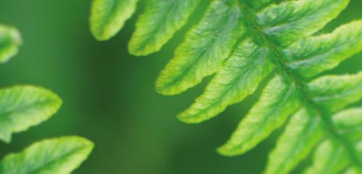 blad grönt